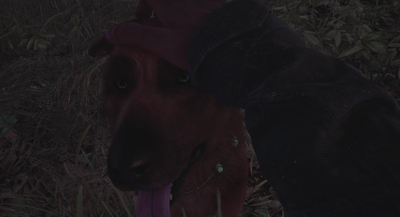 """Bullet der Schäferhund in """"Blair Witch"""""""